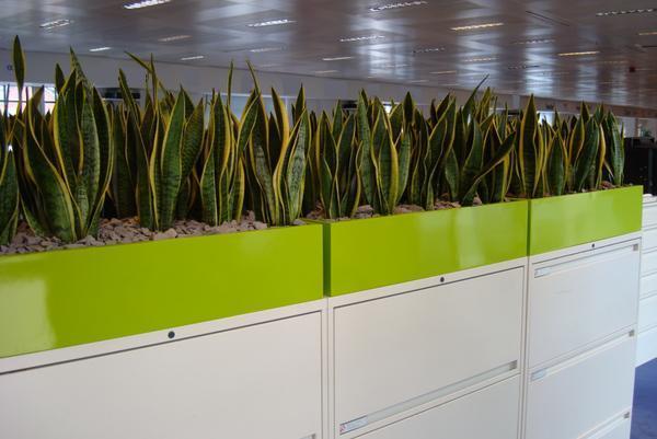 outdoor planter boxes