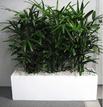 Containers Planter Boxes Gaddys Indoor Plant Hire