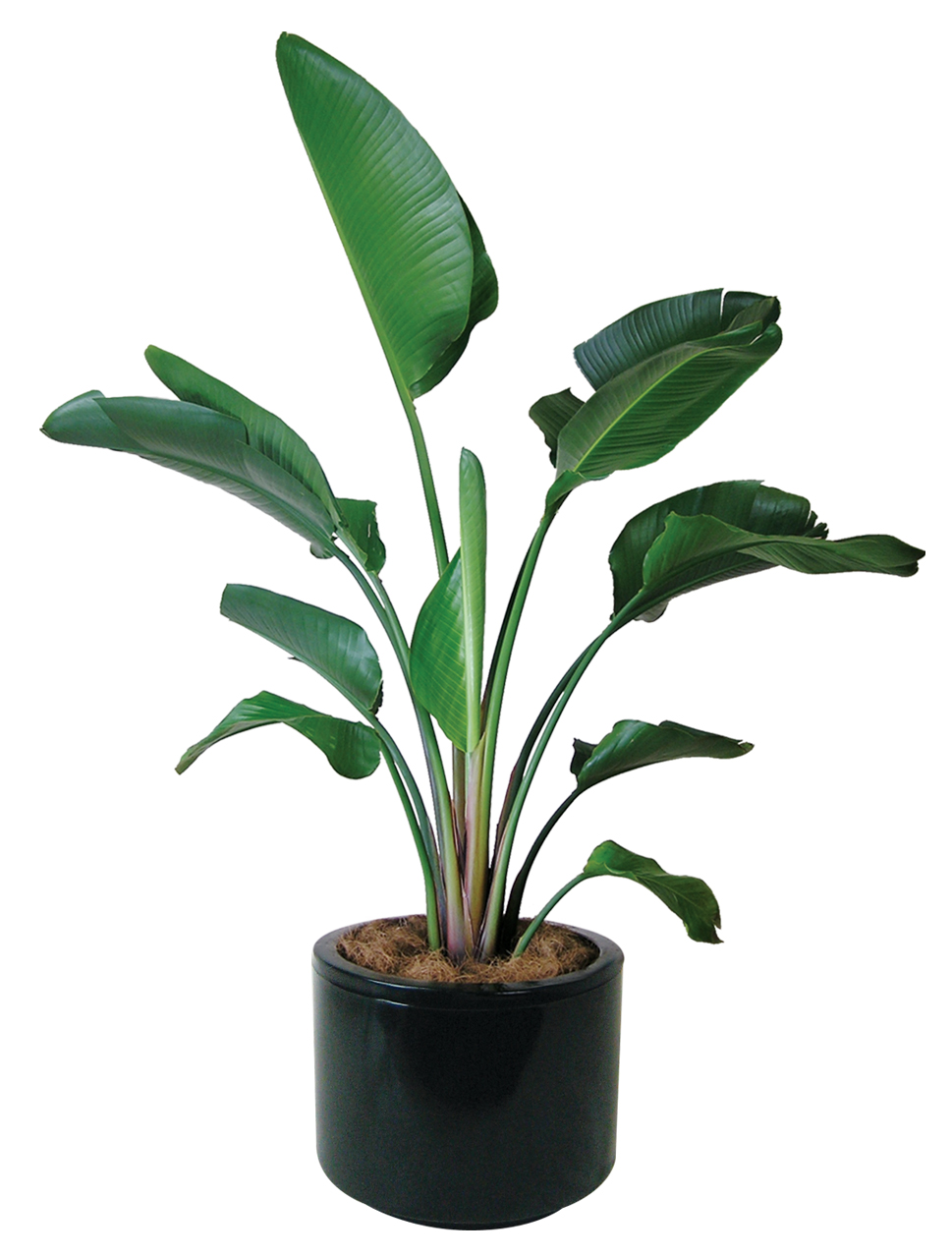 Indoor plants floor plants gaddys indoor plant hire Images of indoor plants