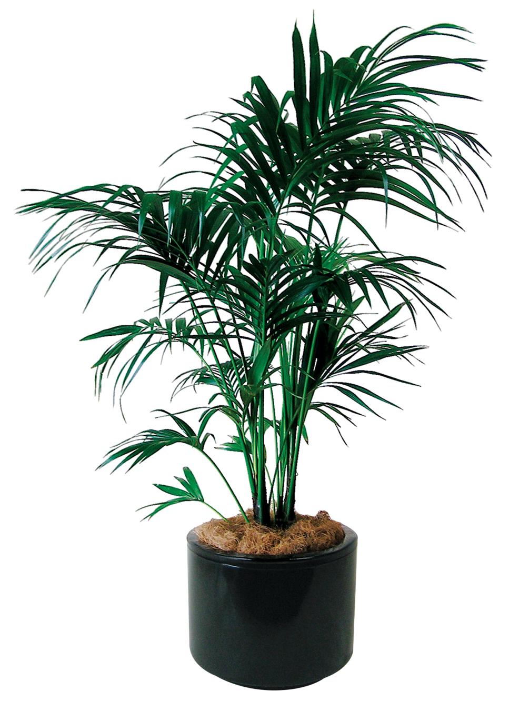 Indoor floor plant for Pictures of indoor palm plants
