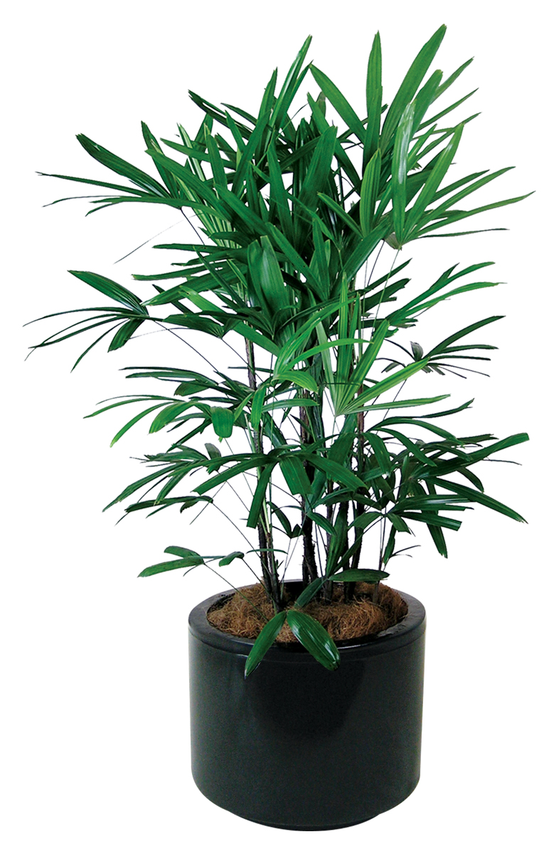 Garden Bush: Indoor Plants - Floor Plants