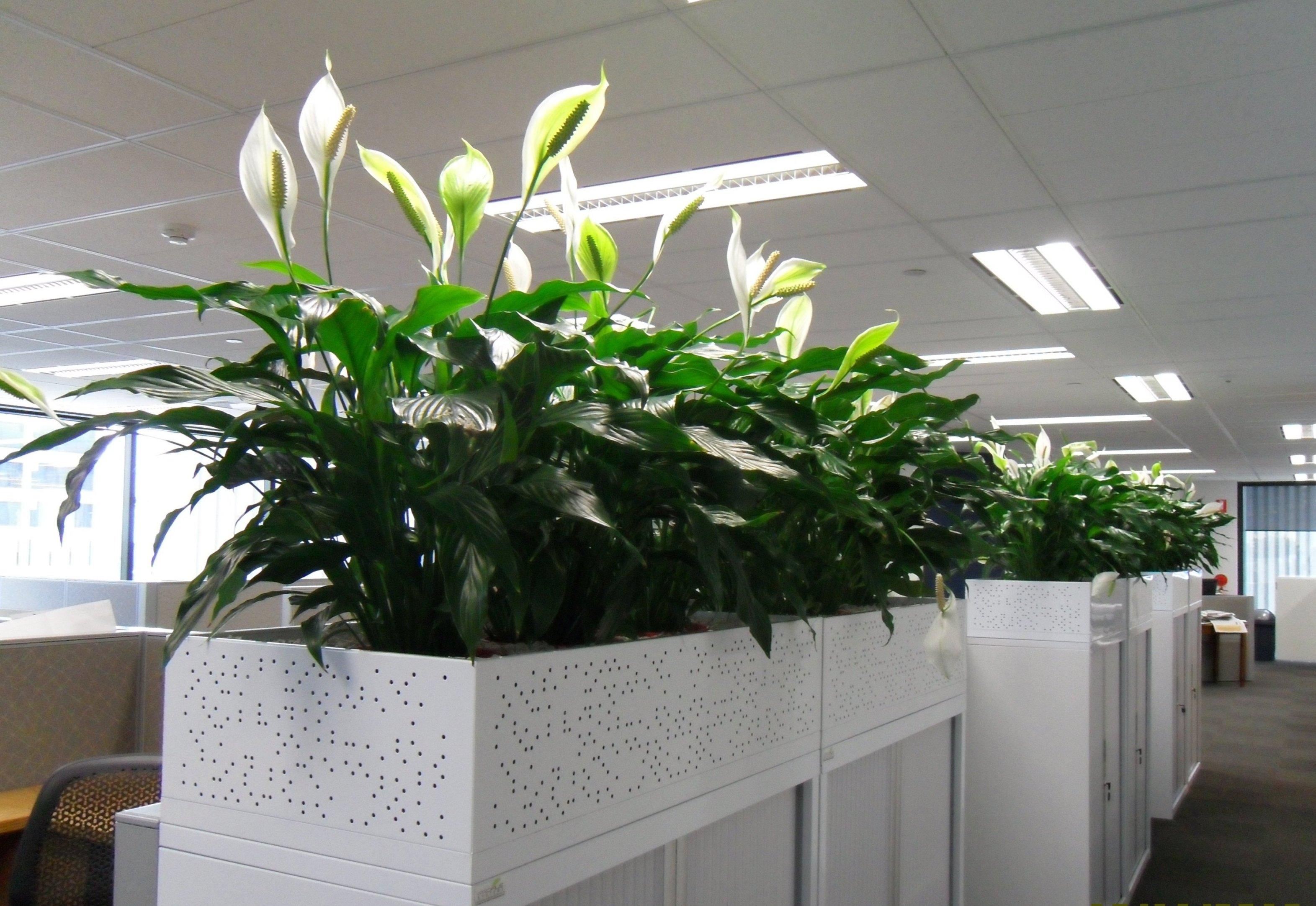 Portfolio gallery gaddys indoor plant hire - Cubicle planters ...