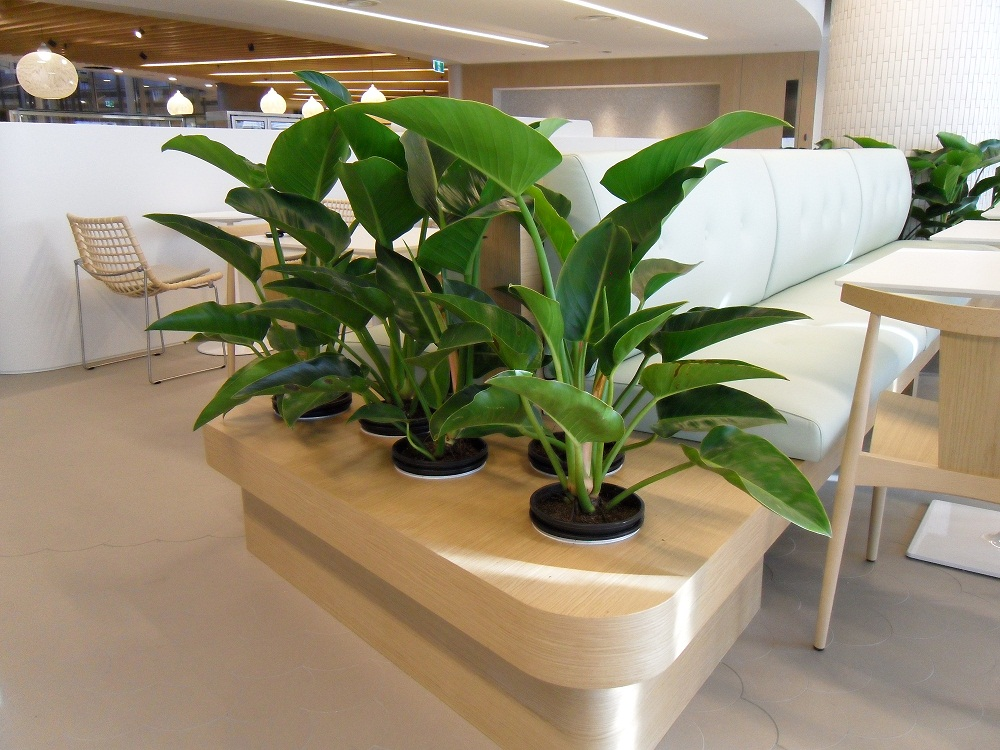 Give your office a remodel with office plant rental gaddys indoor plant hire - Tall office plants ...