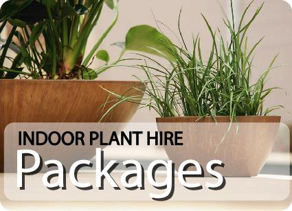 Indoor Plant Hire Packages